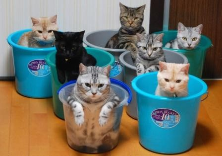 Lovely cats in buckets